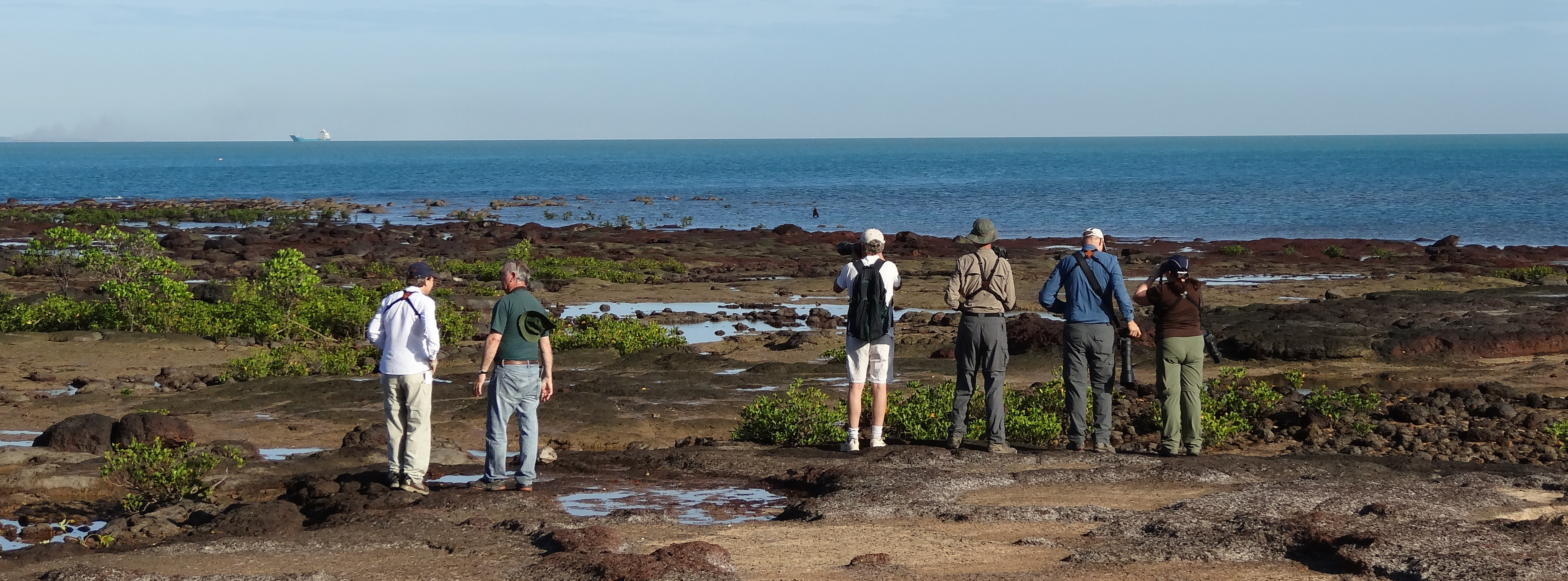 East Point rocks! Great place to see waders, only ten minutes from the centre of Darwin
