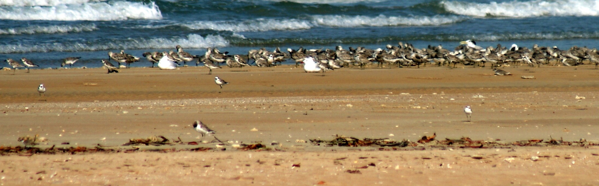 When the tide is right Lee Point hundreds of birds can be seen roosting at Lee Point