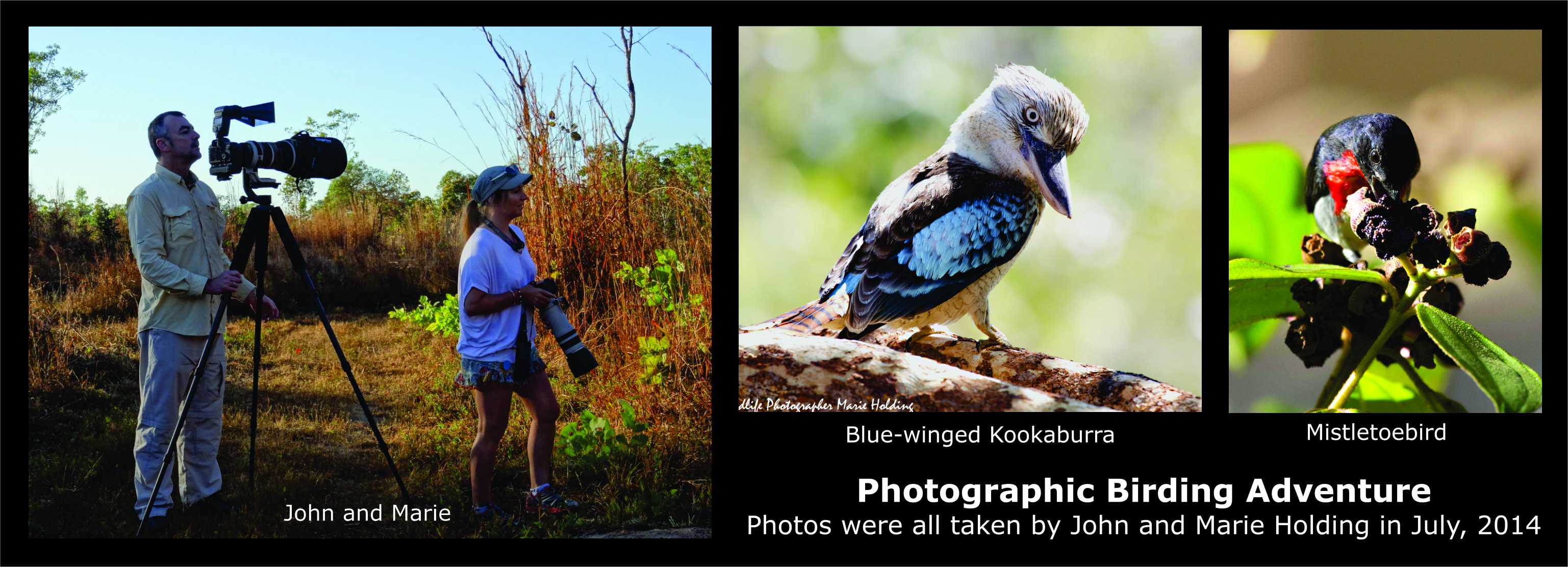 Blue-winged Kookaburra and Mistletoebird © Marie Holding