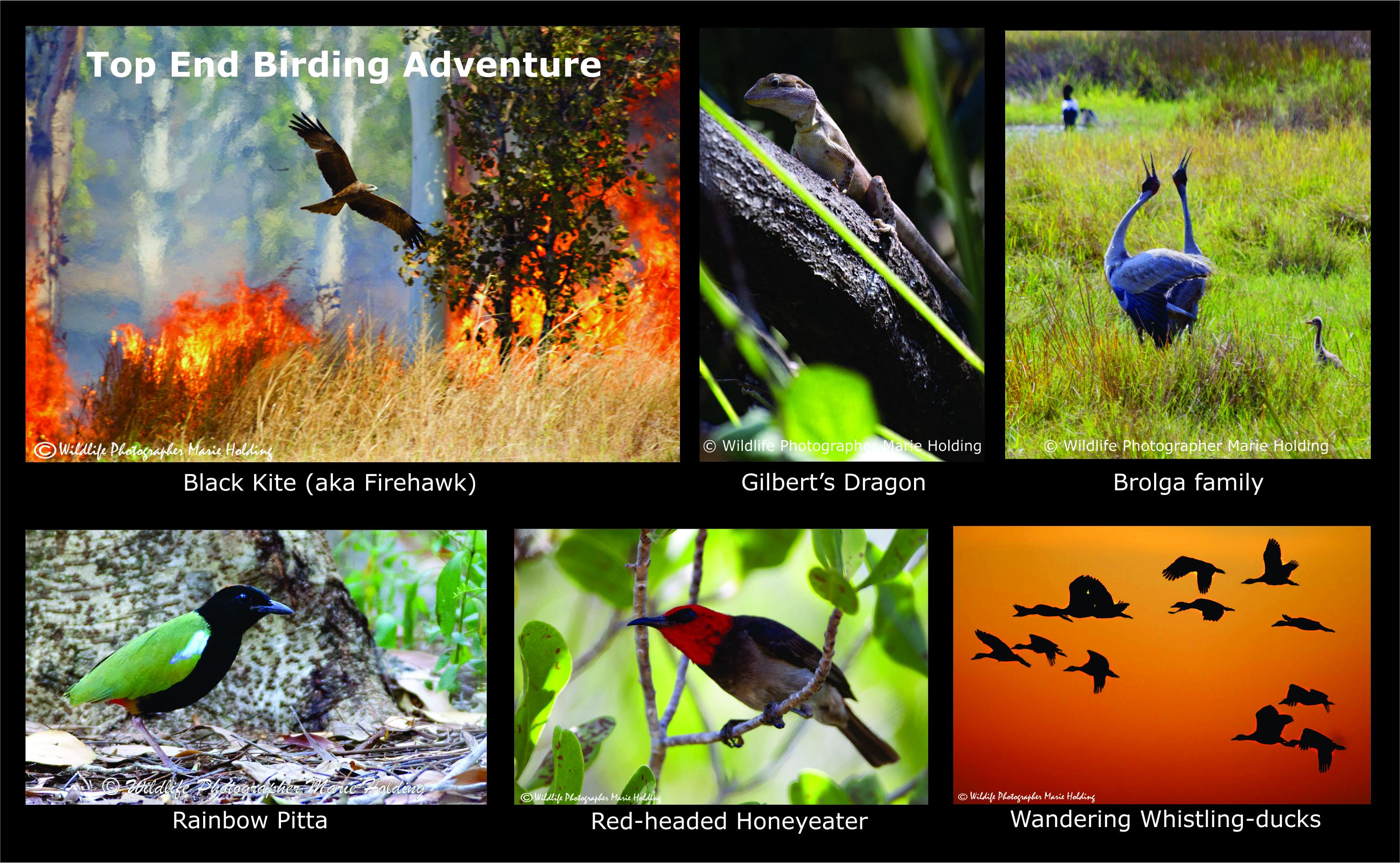 Top End Birding - photos © Marie Holding
